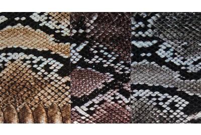 Opvallend en stijlvol: schoenen met slangenprint